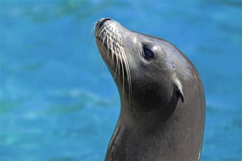 Animal-inspired whiskers key to new navigation technology