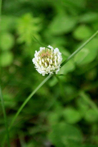Identify Lawn Weeds - Learn About Common Weeds