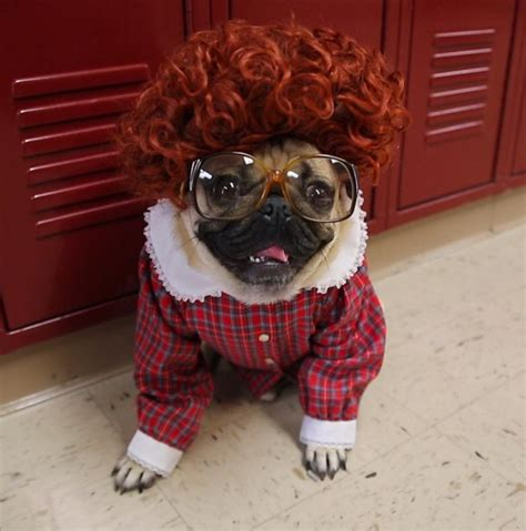 """7 """"Stranger Things"""" Animal Costumes That Have Already Won"""