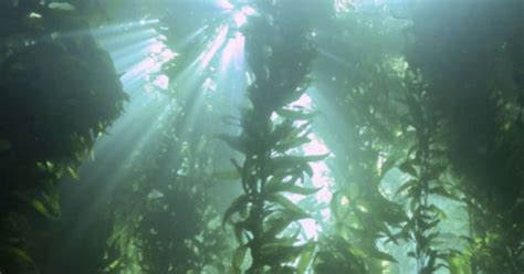 Could underwater farming feed the world? | Popular Science