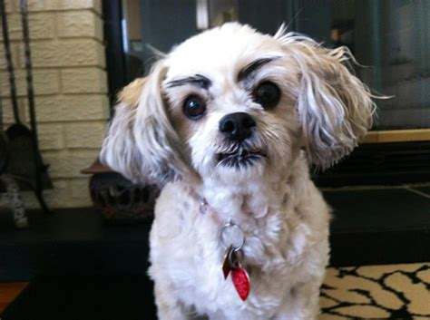 Eyebrows On Dogs Changes Everything