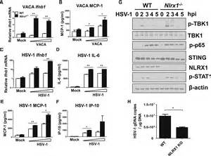 NLRX1 Sequesters STING to Negatively Regulate the