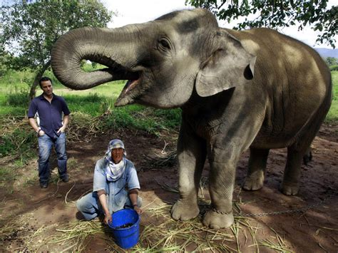 Exotic coffee beans plucked from elephant dung - CBS News