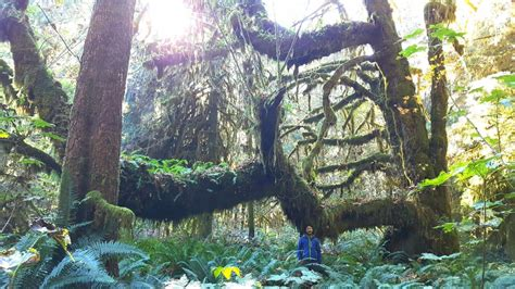"""""""Most magnificent"""" old growth forest in Canada found on"""